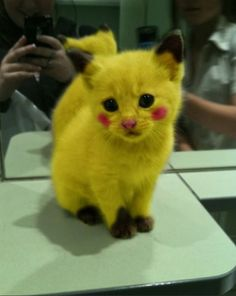 i hate pickachu but this is too cute to ignore lol aww the things animals put up with
