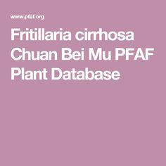 Fritillaria cirrhosa Chuan Bei Mu PFAF Plant Database