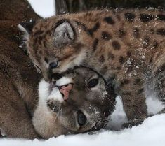 Mother and child ......natural best friends!