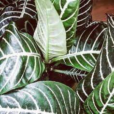 Plant Leaves, Plants, Instagram, Plant, Planets