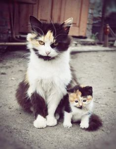 Mommy cat and kitten