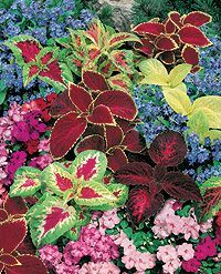 Flowerbed Combination Ideas.  Love the contrast here. This link gives tons of plant combos for sun vs. shade.  Flower beds, containers, etc.