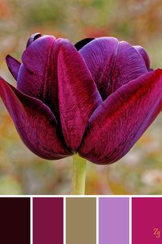 Plum Color Palettes, Burgundy Colour Palette, Colour Pallete, Color Combos, Color Borgoña, Colour Board, Color Blending, Color Mixing, Room Color Schemes