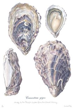 Pacific Oysters Art Print