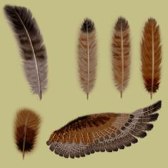 Just wanted to upload my painstakingly-drawn feathers & sample wing, used in my piece Kowareta MESSIAH These are referenced from a redtail hawk's wings, & were drawn completely in Phot...