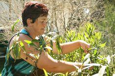 Rongoā Māori practitioner Donna Kerridge harvesting supplies.