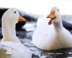 Quack? Oh yeah, Quack, Quack!