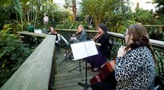 The Butterfly Rainforest serves as a lush and inspiring backdrop for this classical quartet.