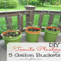 DIY Tomato Planters from 5 Gallon Buckets--What a simple and cheap alternative for garden pots!