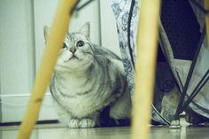 Kitten without Totoro