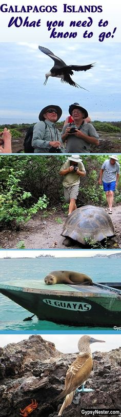 Bucket List Item: The Galapagos Islands!