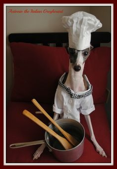 Woofgang Pup Antonio the Italian Greyhound