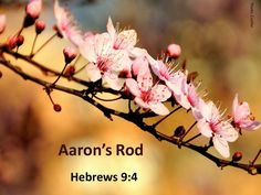 What gives you spring fever? The first bloom of your favorite flower? Check out this collection of spring images. Hebrews 9, Mercy Seat, Bible In A Year, Spring Images, The Tabernacle, Almond Blossom, Ends Of The Earth, High Priest, Shabbat Shalom