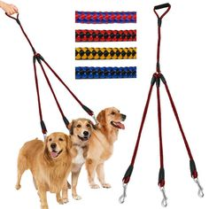 3 Way Nylon Dog Coupler Leash No-Tangle Triple Pet Leash Lead Fit For Walking Three Small Medium Large Dogs Dog Accesories, Car Accessories, Dog Toilet, Dog Grooming Business, Gucci, Dog Hacks, Large Animals, Old Dogs, Training Your Dog