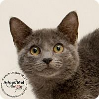 Adopt A Pet :: Gracie - Troy, OH