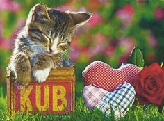 A tabby kitten in a tin can with rose - Cats Wallpaper ID 1377421 - Desktop Nexus Animals