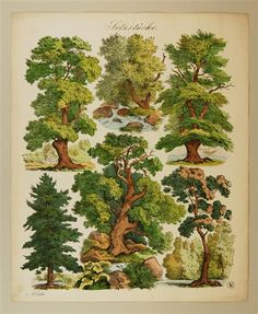 Setzstücke. [Bäume.] No. 250.