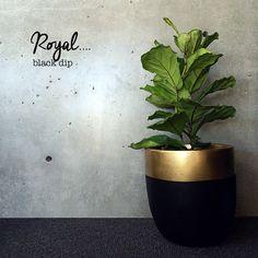 Black & Gold Planter http://ohwhatsthis.com/2015/03/20/black-gold/