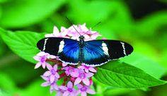 Butterflies in Lake Bluff, Il
