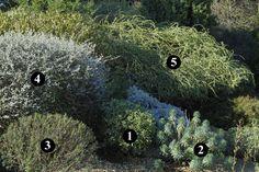 1 : Cistus albidus  2 : Euphorbia characias subsp. wulfenii  3 : Cistus clusii  4 : Teucrium fruticans  5 : Atriplex canescens