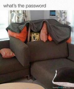 Whats The Password - funnydogsite.com #dogs #funny #cute