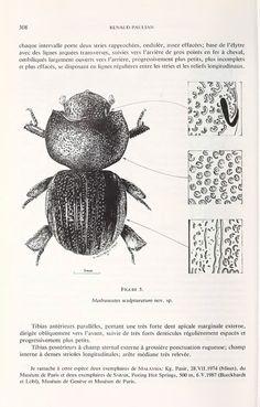 Notes sur les Coléoptères Scarabaeoidea du Muséum de Geneve. IV - BioStor