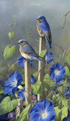 Bluebirds and Morning Glories - in September  - the flower of September