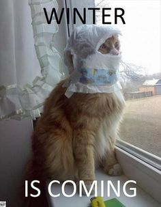 cat 's winter   Funny Jokes, Quotes, Pictures, Video