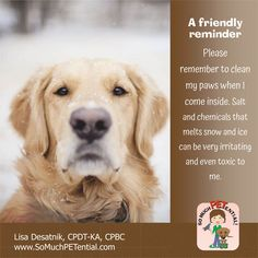 Careful With Your Dog's Paws This Winter: a safety tip from Cincinnati certified dog trainer, Lisa Desatnik, CPDT-KA
