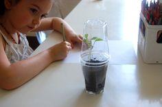 Voilà un petit projet qui allie science, jardinage et activité sensorielle. On s'est inspiré de l'activité sur le blog the handmade homepour créer notre petite serre et regarder pousser des graines.Nous avons choisi des graines de coriandre, et avec un fond de terreau et deux gobelets en plastique transparent, nous avions tout le nécessaire pour réaliser notre expérience. On remplit le premier gobelet de terreau (ou de coton, si vous n'avez que ça sous la main), On installe ensuite quelques…