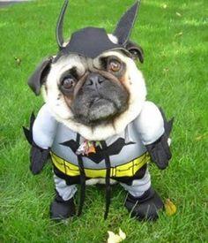 Batman omfg zoe you better love this