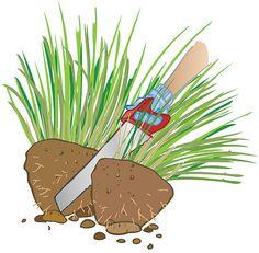 Dividing ornamental grasses, this should say really? Garden Yard Ideas, Lawn And Garden, Garden Landscaping, Garden Seeds, Garden Plants, Garden Bed Layout, Dwarf Plants, Types Of Grass, Ornamental Grasses