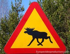 Señal sueca de carretera de alerta por alces