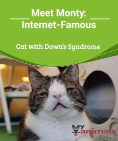 Meet Monty: Internet-Famous Cat with Down's Syndrome   This is the story of Monty, a cat who was born with a chromosome anomaly that gives him unique facial features, which have made him famous on social media. This pussycat lives happily in Denmark with his owners Michael Bjorn and Mikala Klein, and two other felines.