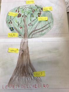 Esseri viventi e non viventi, classe prima – Maestra Mihaela Gaia, Botany, 3, Album, Snoring