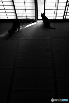 Japanese sliding panels, Shoji 障子