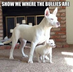 Funny Dogs with Captions | Description from Funny Dog Pictures With Captions wallpaper :
