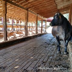 Dairy Farming: Perce