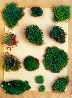 Mix up moss paint to create a living art installation. Paint any designs you want — then watch them grow green over time. For more creative gardening projects, visit P&G everyday today!