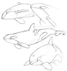 Orca sketches. http://www.jenrichardsart.com