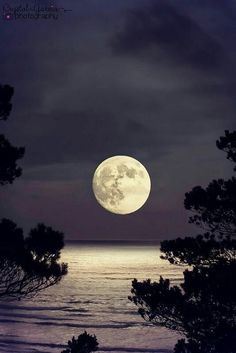 Here are some amazing Full Moon Photography Tips and Ideas that will come handy if you are keen on taking creative moon pictures. Shoot The Moon, Moon Photography, Photography Tips, Wedding Photography, Moon Moon, Big Moon, Luna Moon, Moon Rise, Moon Magic