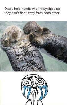 Cuteness Overload | Know Your Meme. Otters hold hands while they sleep so they don't float away from each other.