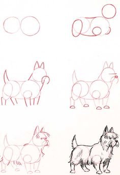 Learn how to draw: Terrier ♥ | ©