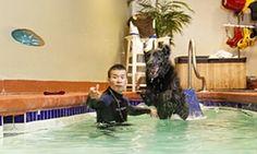 dog pool pet resort