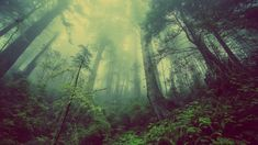 Pop Music || Copyright Free YouTube Music Free Photos, Free Images, Pictures Images, Misty Forest, Dark Forest, Nature Tree, Nature Nature, Relaxing Music
