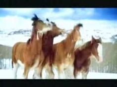 Beer Commercial Budweiser Clydesdale Snow Fight