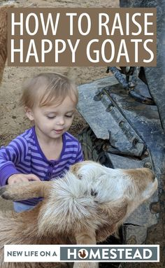 Everything you need to know about raising goats on the homestead. #goats #livestock #homesteading Keeping Goats, Raising Goats, Goat Pen, Happy Goat, Goat Care, Nigerian Dwarf Goats, The Barnyard, Goat Farming, Chickens Backyard