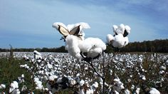 Back to Basics. How do organic cotton t-shirts stack up to their conventional cousins? Photo: Courtesy of Cotton of the Carolinas | #EcoFashion