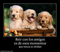 Imagenes De Humor Para Facebook | imagenes graciosas para facebook de amistad-4553a_317937 ...
