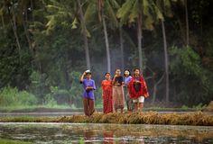 Women in Rice Field of  Sumbawa Island Indonesia